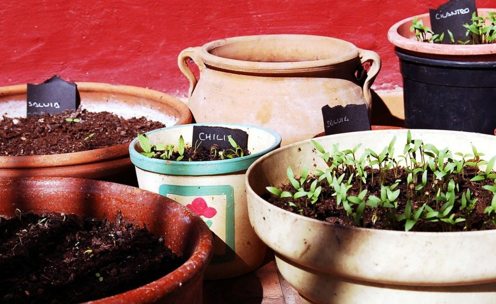 cultiver en pot