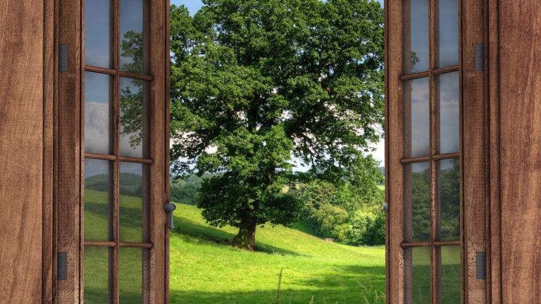 Quel bois choisir pour ses fenêtres ?